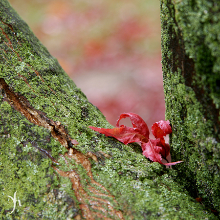 Red Leaf in Balance