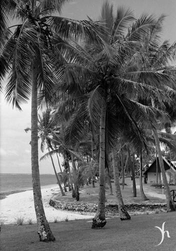 Palms at Tambua Sands