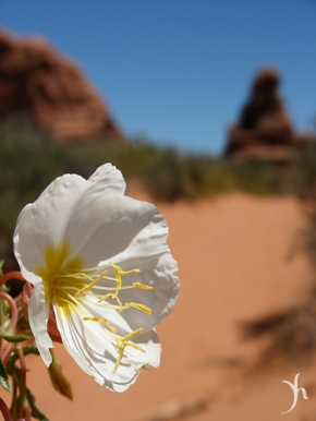 Flower at Arches